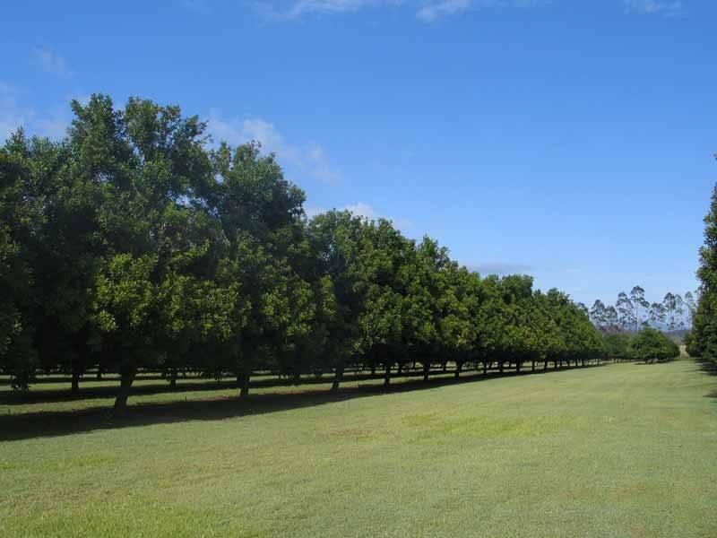 GYMPIE MACA GYMPIE MACADAMIAS, Gympie QLD 4570